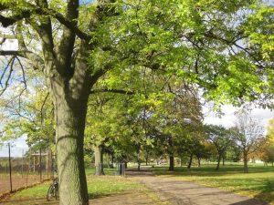 trees urban development