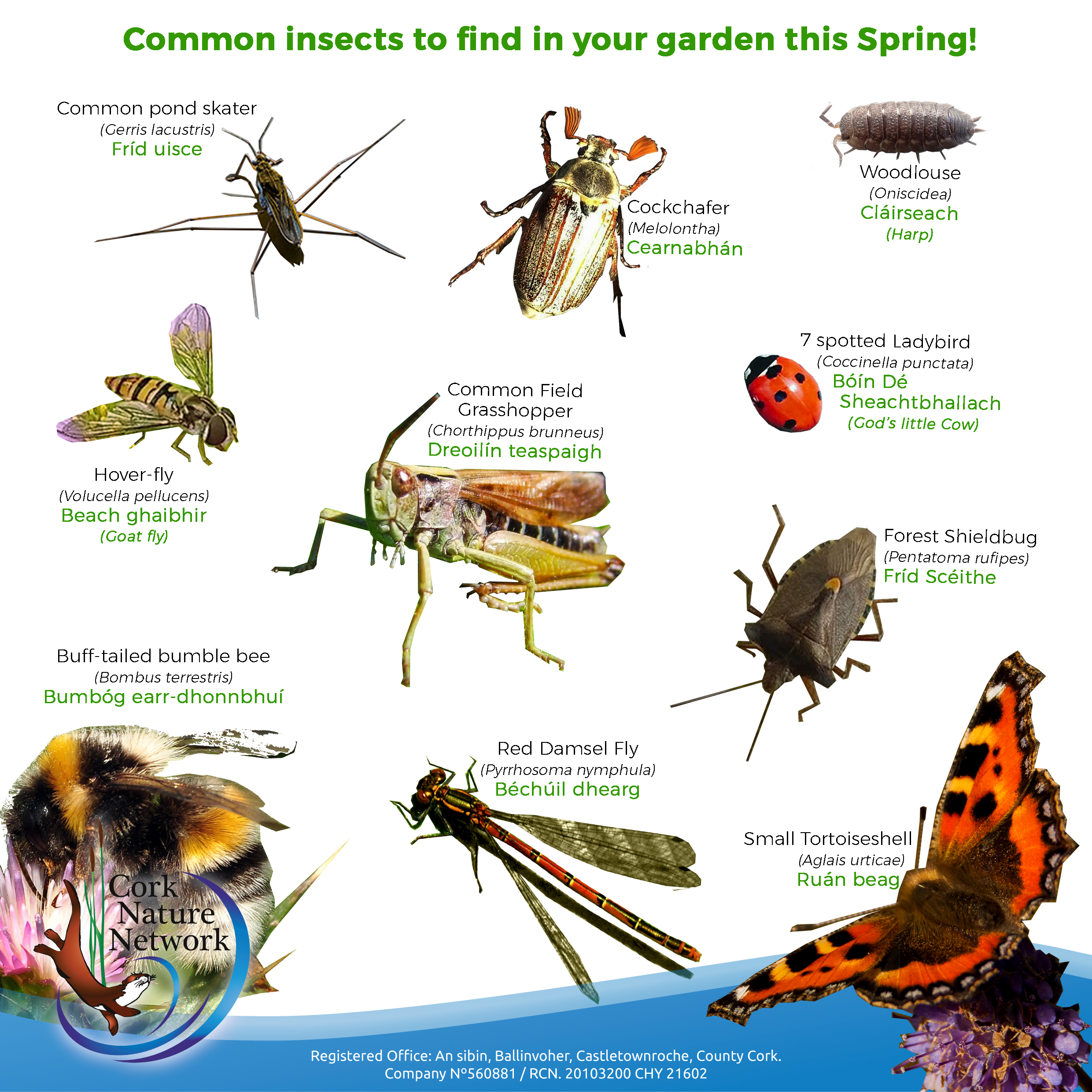 SPRING INSECT POSTER