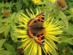 biodiversity butterfly