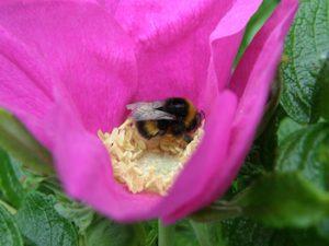 backyard biodiversity initiative