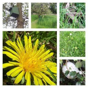 GARDEN biodiversity