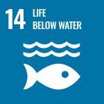 UN goal 14 - life under water